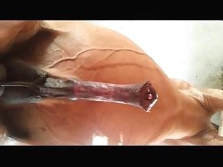porno best Zoofilia Sex Porn movies page 1