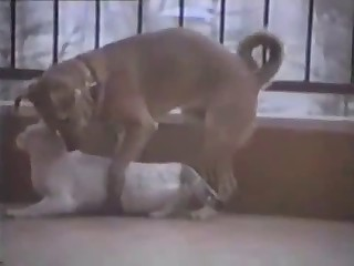 Horny doggie really wants to bang this amazing slut