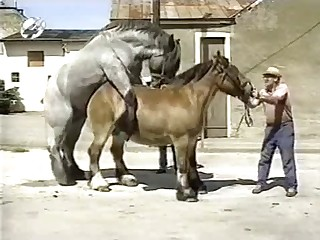 Horse bestiality sex action look amazing